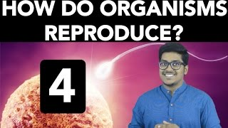 Biology: How do Organisms Reproduce? (Part 4) thumbnail