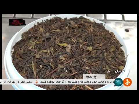 iran-made-kombucha-drink-production,-sari-county-توليد-كمبوچا-نوشيدني-چاي-شهرستان-ساري-ايران