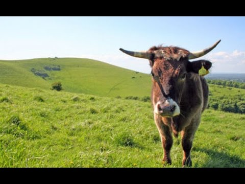 Got Milk? Early Humans and Lactase Persistence