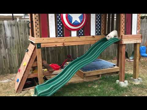 Funny Cats Playing on Slides | Kittens on Slides Compilation