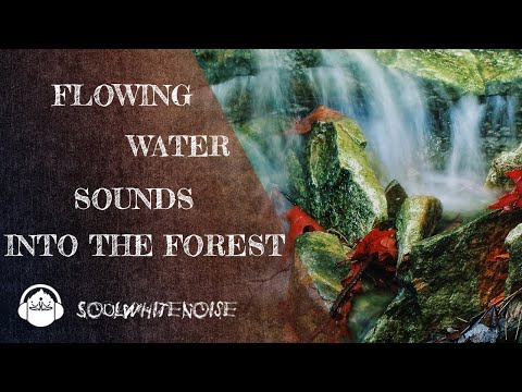 Water Flowing Sounds Into The Forest For Relaxation And Sleep