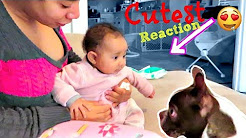 Baby Notices Funny Puppy For The First Time! (Cutest Reaction Ever!)
