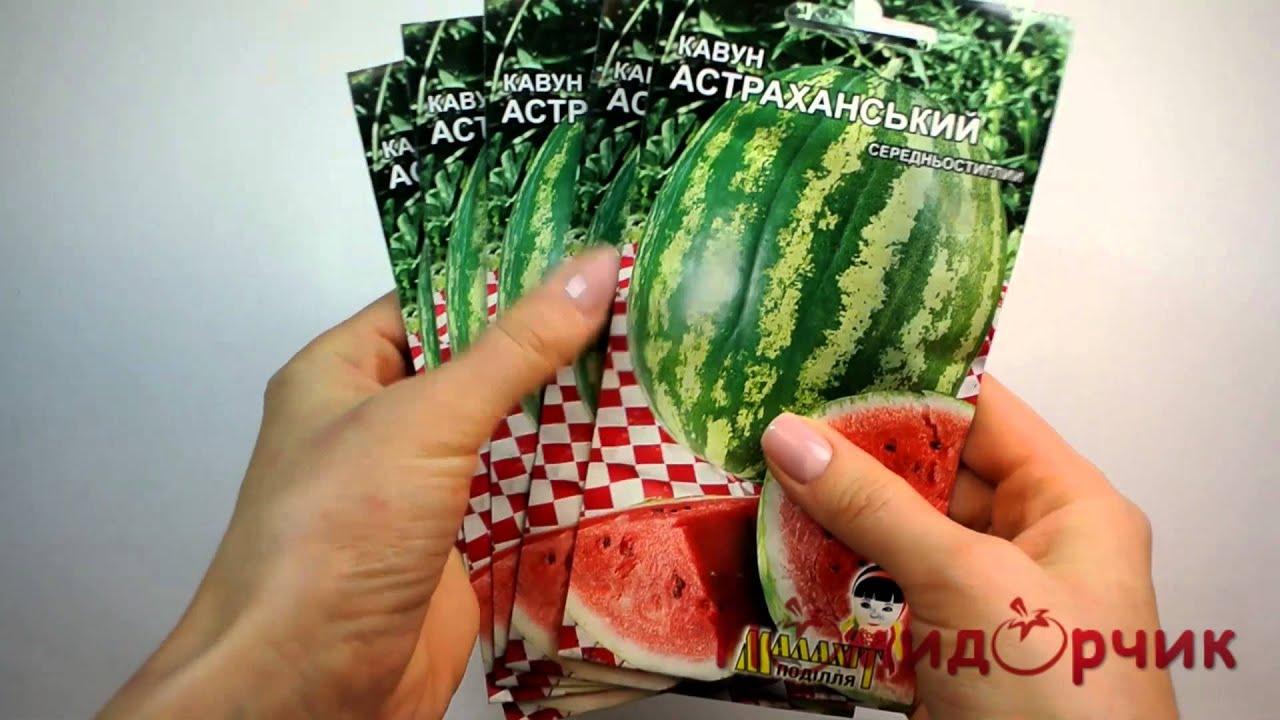 Купить семена арбуза в москве по цене производителя оптом на агро sos. Семена арбуза в профессиональной упаковке оптом либо расфасовывают впоследствии в более мелкую упаковку для реализации через торговые сети, либо используют для. 9, семена арбуза астраханский, семко 1 кг, 5250.