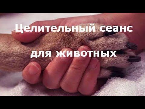 Вопрос: Каким святым молиться о животных?