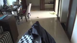 Pug Gets Scared Of Umbrella Starts Shitting!