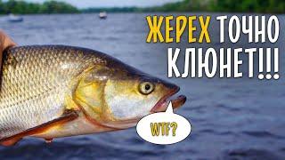 НА ЧТО ЛОВИТЬ ЖЕРЕХА ЛЕТОМ Вся рыба клюет в корягах