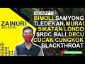Harga Burung Bimoli Samyong Kenari Sikatan Londo Kw Kacer Murai Tledekan Dll Dikios Zainuri  Mp3 - Mp4 Download
