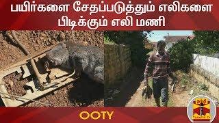 பயிர்களை சேதப்படுத்தும் எலிகளை பிடிக்கும் எலி மணி   Rat   Ooty