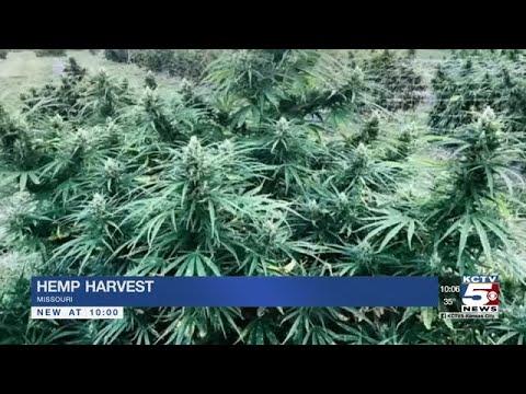 Industrial hemp farm has first legal harvest since WWII