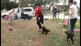Puppy Socialisation Training With Positive K9 Training