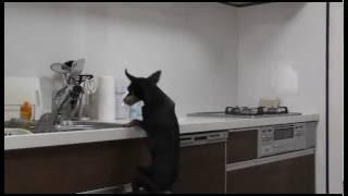 時々キッチンの上の食べ物がなくなるので、どうやって食べているのか 隠...