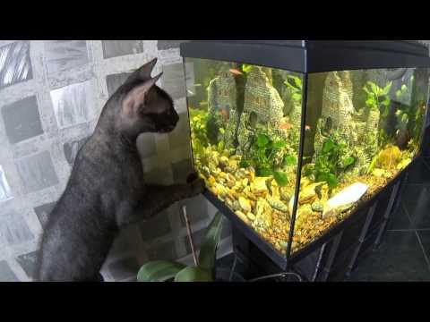 Запуск аквариума 60 литров. Выпуск №215
