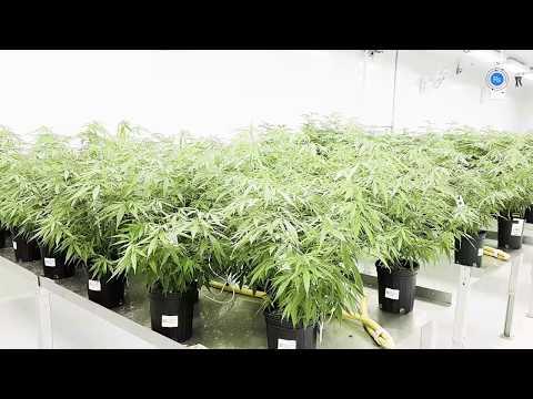 420stocks net – buy low…sell high