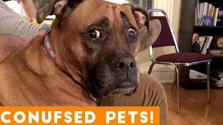 Funniest Confused Pets Compilation 2018  Funny Pet Videos