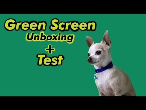 "shooting-with-a-green-screen:-""chihuahua-disappears-after-being-told-he's-the-father"""