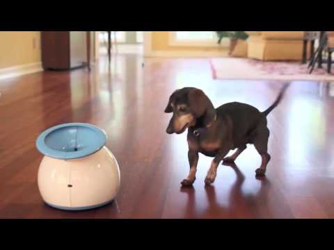 interactive-dog-toys-15-seconds---ifetch