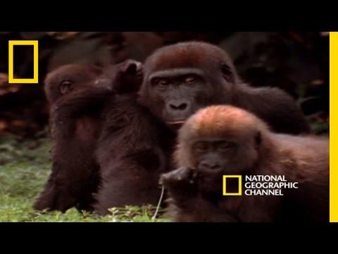 Ndoki Rain Forest   National Geographic