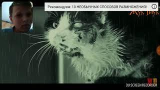 Стихотворение уродливый кот от жука паука