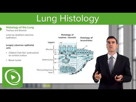 Lung Histology – Respiratory Medicine | Medical Education Videos