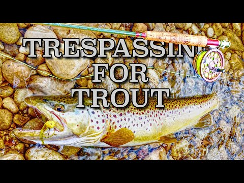 TRESPASSING For TROUT Large Flies & Large Browns On The Saugeen River | Saugeen River Trout Fishing
