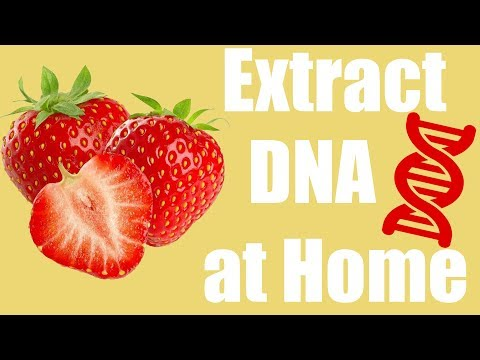 Extract DNA from a Strawberry at Home - Cool Science Experim