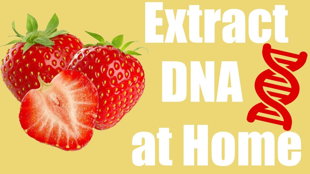 Dna extraction strawberries