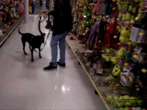 Talking Dog and Trip to Petsmart