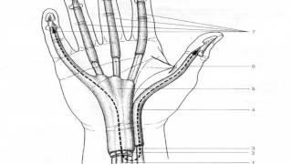 traumatologie Les infections de la main