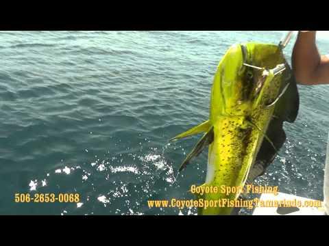 Coyote Sport Fishing Tamarindo Costa Rica