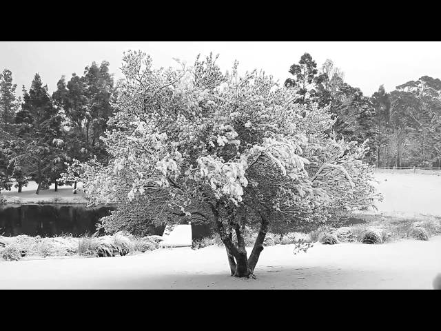 Ron C. Moss: Snow Falling