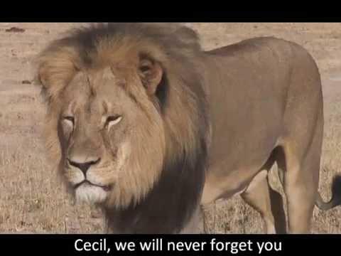 [ORIGINAL] Cecil - Penélope Ferrón