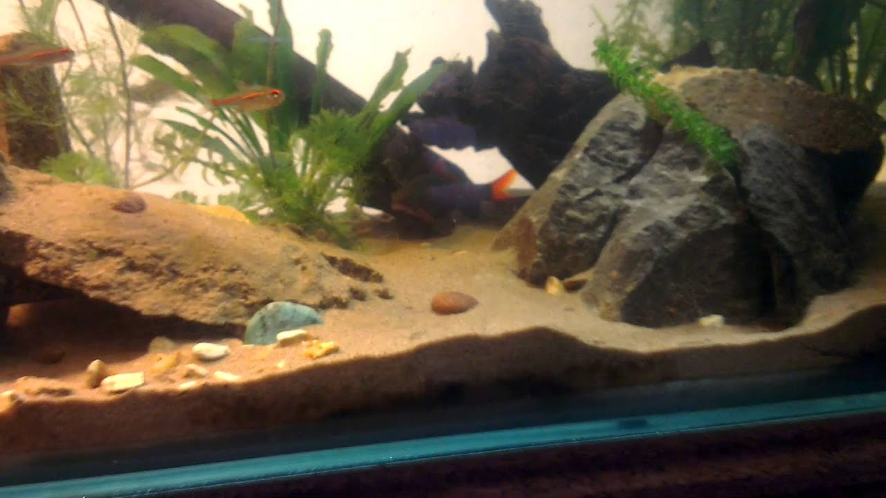 Riverbed Aquarium Youtube