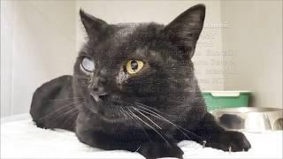 Спасение бездомного кота с глаукомой отнесли в клинику нужна операция