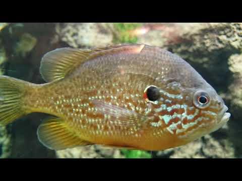 Aquarium Part 1 - Cabela's Bass Pro Shop - Hamburg, Pennsylvania