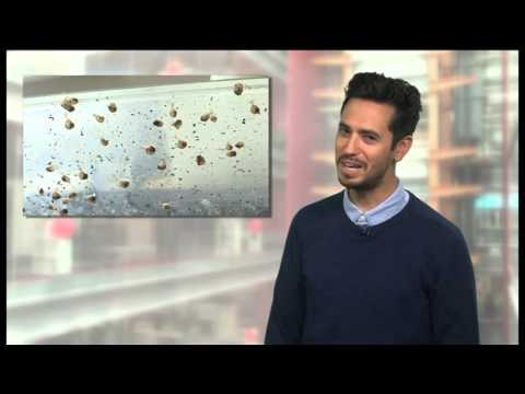 BBC Learning English: Video Words in the News: Snail farming (10th September 2014)