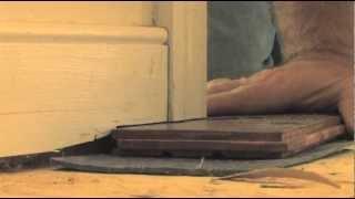 Flooring 101 Tip: Installing Under Doors with a Jamb Saw | Lumber Liquidators