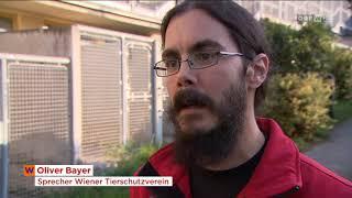 Gesetzesverschärfung: Listenhunde ins Heim? ORF Wien heute