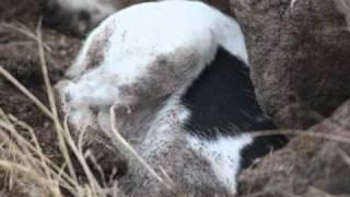 Tucker: Jack Russell Terrier On Rodent Patrol