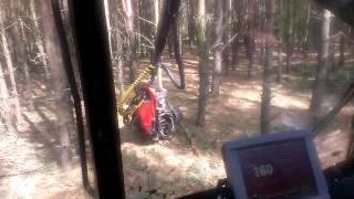 Ścinka drzew harwesterem Valmet 911.3 z kabiny