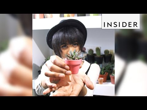 The Sill in NYC sells the world's cutest tiny plants