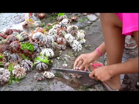 The poor in Dumaguete harvesting Sea Urchins ~ Dumaguete Boardwalk ~ Philippine Tourism