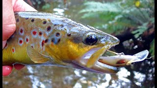 Small stream trout fishing mixed bag