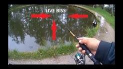 Live Bisse Mit Gummi auf Forelle am Forellenhof mit den Trout Collector #ULfishen #Forellenangeln