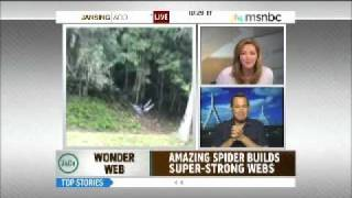 Chris Jansing freaks over some breaking spider news