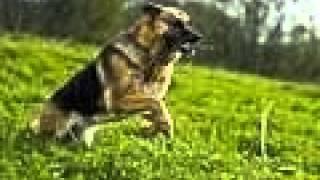 Учёные научили собак обнаруживать онкологические заболевания.