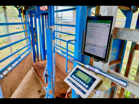 agrieid-cattle-scales---build-your-own-platform-and-install-in-less-than-30-minutes.