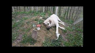 मालिक की मौत के बाद टूट गया ये डॉगी, रोज उसकी कब्र पर जाता है और करता है ऐसा...