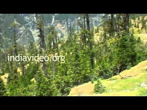 Gulaba picnic spot in Manali, Himachal Pradesh