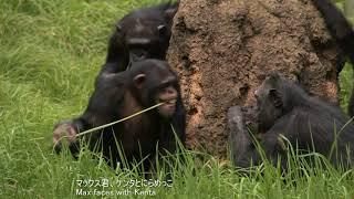 Chimps at Tama Zoological Park, filmed in September, 2017 #2.