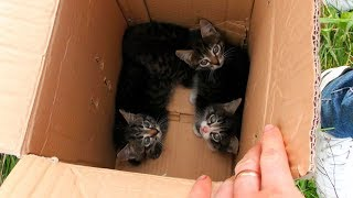 Спасение 3х котят у пруда Семья Булатовых